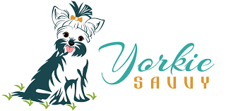 how to recognize and treat yorkie skin allergies yorkie savvy