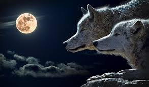 dreams about wolves interpretation and meaning