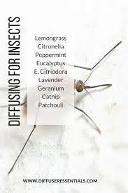 essential oils to repel insects u2013 diffuser essentials
