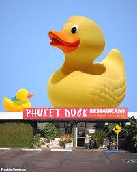 oh duck it gallery ebaum u0027s world
