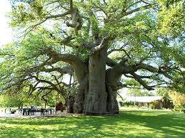 betty white has nothing on this south tree george clooney