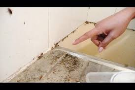 cafard cuisine cafards dans la cuisine à marseille que faire nettoyage de