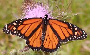 arkansas native plant society asnca u0027s birds bees and butterflies workshop audubon arkansas