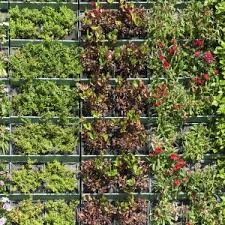 awesome vertical vegetable garden bunnings garden design