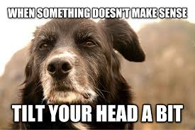 Advice Dog Memes - advice dog for giggles pinterest wisdom pup and dog