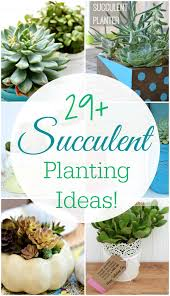 29 amazing succulent planting ideas mom 4 real