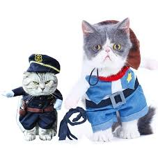 Kitten Halloween Costumes Pet 25 Cat Costumes Pet Ideas Cute Cat