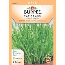 seed packets burpee cat grass seed packet walmart
