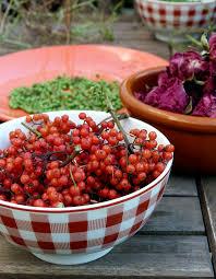 cuisine plantes sauvages cuisine des plantes sauvages