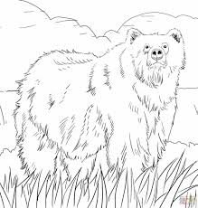 american indian coloring pages kids printable free coloing indian sloth page indian bear coloring