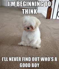 Cute I Love You Meme - animal i love you memes