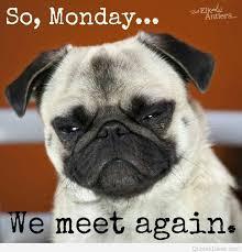 Grumpy Dog Meme - luxury grumpy dog wallpaper site wallpaper site