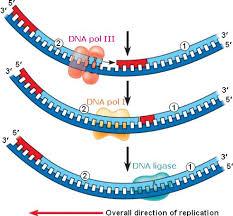 inheritance pattern quizlet chapter 16 the molecular basis of inheritance