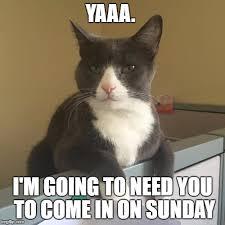 Working Cat Meme - working cat imgflip
