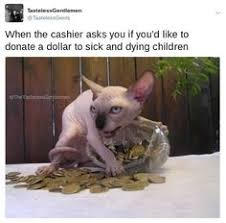 Hairless Cat Meme - very interesting post top 35 cats and kittens pictures also
