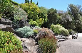 australian garden flowers gardens things to do blue mountains australia