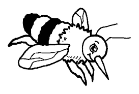 wonderful bumble bee coloring pages colori 8113 unknown