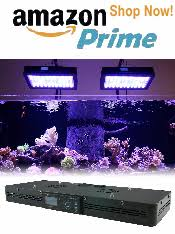 Reef Aquarium Lighting Aquarium Lighting U2013 The Aquarium Setup Filtration And