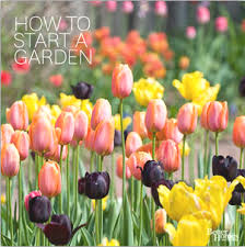 beginners guide to gardening irish recycled products