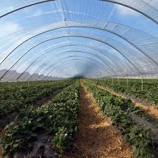 greenhouse plastic sun selector uva clear greenhouse film 4