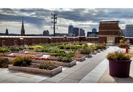 greenroofs com projects rothenberg rooftop garden