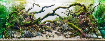 Dramatic Aquascapes Aquascaping Categories My Own Take On It Aquascaping World Forum