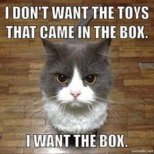 Toys Meme - cat meme i don t want the toys that came in the box i want the box