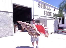 where to buy seashells shell horizons inc seashells and seashell products wholesale