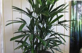 easy office plants home design ideas and pictures