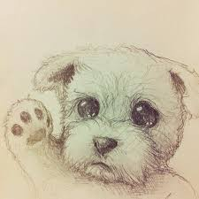 11 best cute animal drawings images on pinterest animal drawings