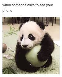 Funny Panda Memes - scared panda funny pictures quotes memes funny images funny