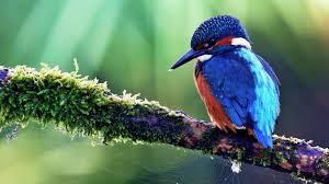 bird wallpaper download wallpaper 1920x1080 bird tropical bird color tree sit