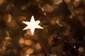 christmas tree flower lights wallpaper sunlight night branch christmas tree light tree