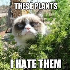 Animal Meme - silly animal memes popsugar pets