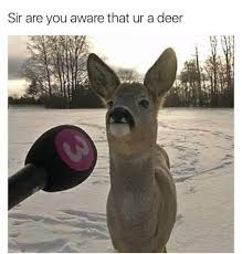 Deer Meme - sir are you aware that ur a deer animals know your meme