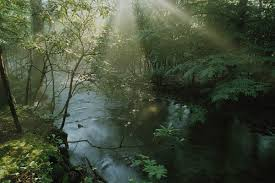 Wall Mural Sunlight In The Brewster Home Fashions National Geographic Forest Stream With