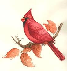 Indiana birds images Ihb indiana state bird gif