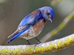 Colorado Birds images Noise pollution causes chronic stress in birds hindering jpg
