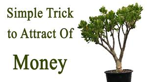 Fung Shwai by Simple Feng Shui Trick To Attract Of Money Youtube
