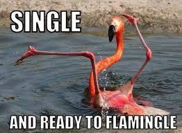 Meme Single - single meme