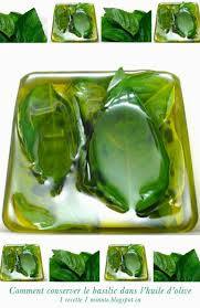 basilic cuisine 1 technique de cuisine comment conserver le basilic frais dans l
