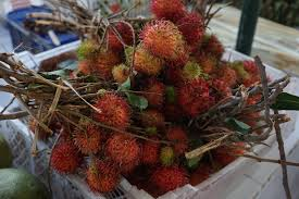 fruit similar to lychee indonesian cooking class u2013 the journey south