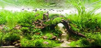 Aga Aquascape New Featured Aquascape Page 2 Uk Aquatic Plant Society