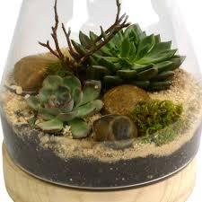 succulent terrarium you can look small terrarium plants you can