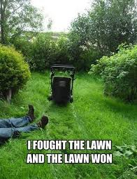 Grass Memes - the grass is always nicer on the other lawn work memes laughter