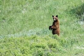 Montana Wildlife Tours images Nature birding and wildlife tours in missoula montana with a jpg