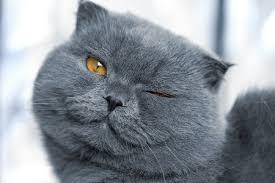 hukum memandulkan kucing hukum memandulkan kucing peliharaan detik islam