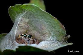 Cute Spider Memes - melvyn s photography 2014