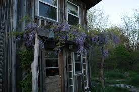 the adventure of wisteria lodge tiny house blog