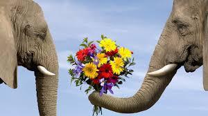 Love Flowers Love Flowers Animals Elephants Bouquet Wallpaper Allwallpaper In